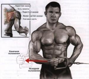 упражнения для дельтовидных мышц на блоке