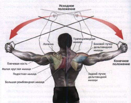 накачать дельтовидные мышцы на тренажерах