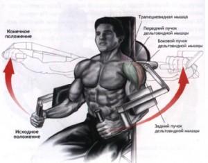 накачать дельтовидные мышцы