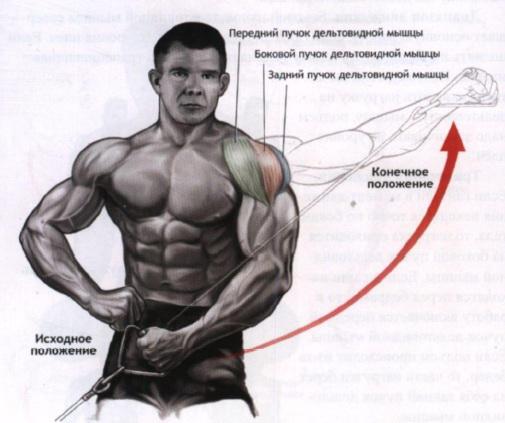 упражнения для дельтовидных мышц на тренажерах