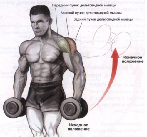 упражнения для дельтовидных мышц с гантелями