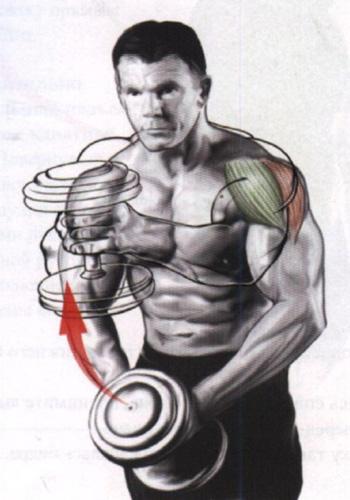 упражнение для дельтовидных мышц