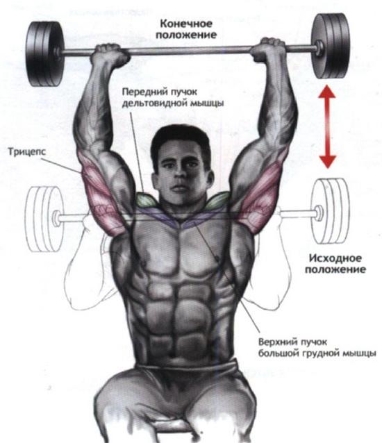 упражнения для дельтовидных мышц со штангой