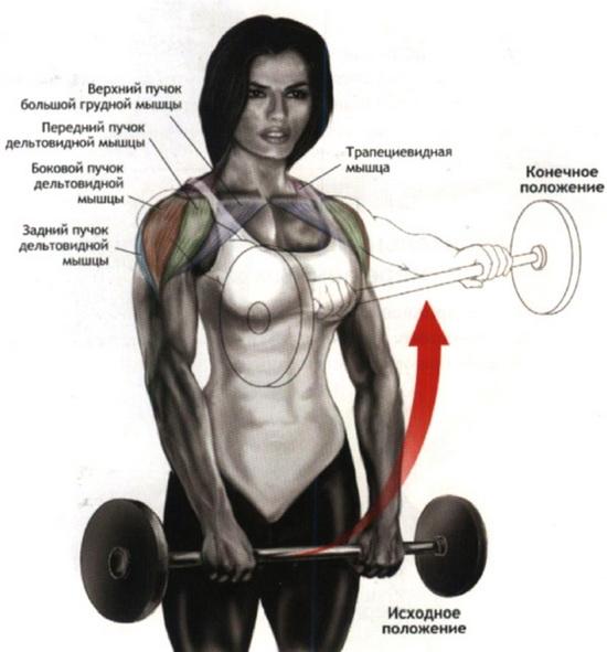 как накачать дельтовидные мышцы со штангой