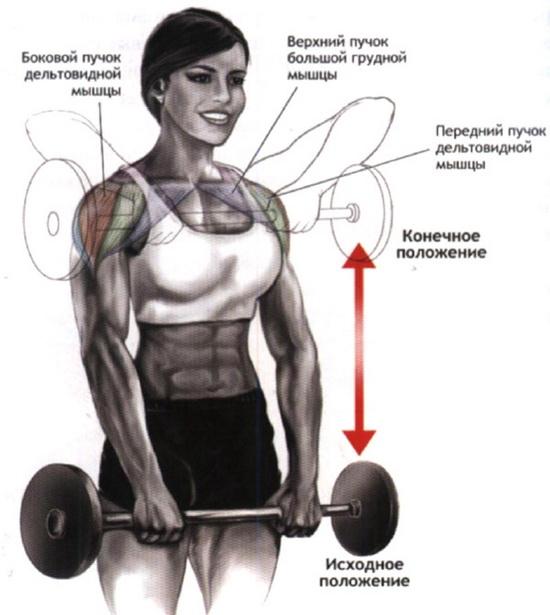 как накачать дельтовидные мышцы дома