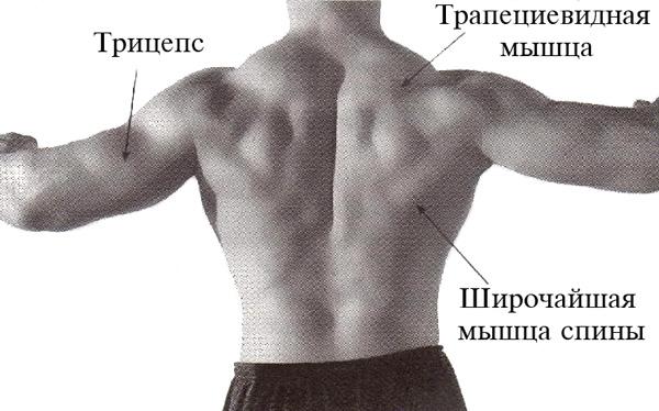 какие мышцы работают при подтягивании