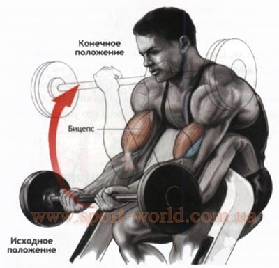 упражнение на бицепс на скамье скотта