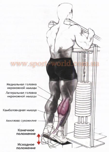 упражнения для мышц голени