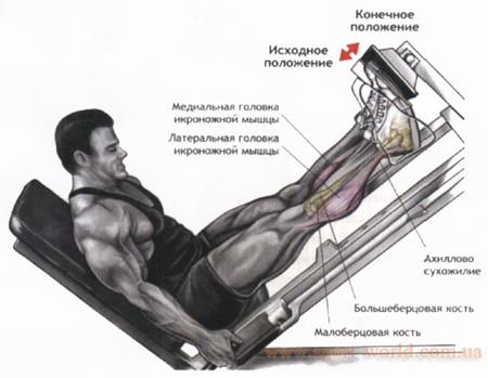 как накачать мышцы голени