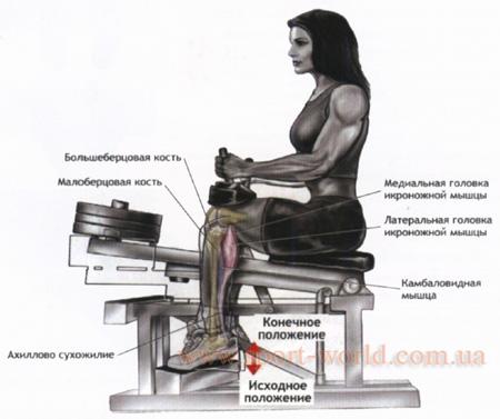 тренировка мышц голени