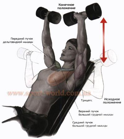 Упражнения для мышц груди с гантелями