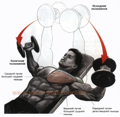 как накачать мышцы груди в домашних условиях