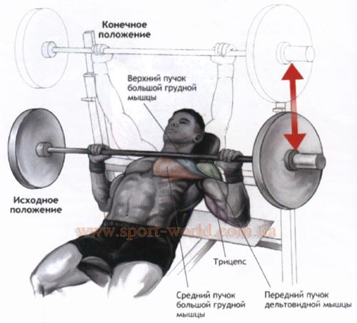 Упражнения для мышц груди со штангой