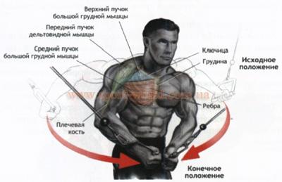 Комплекс упражнений для грудных мышц