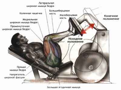 упражнение для четырехглавой мышцы бедра