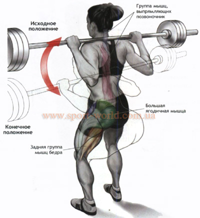 упражнения для нижней части спины