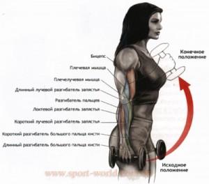 упражнение для предплечий молот