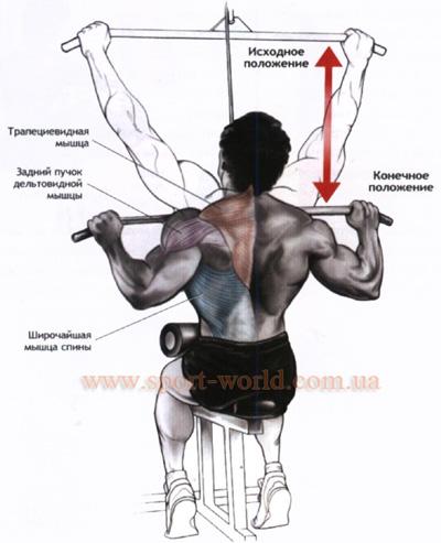 упражнения для среднего отдела мышц спины