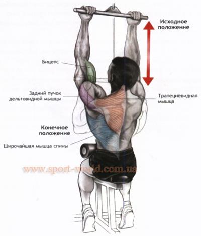 как накачать широчайшую мышцу спины