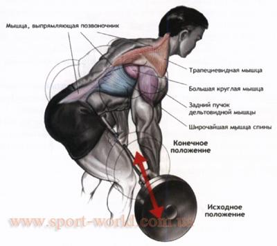 комплекс упражнений для широчайшей мышцы спины