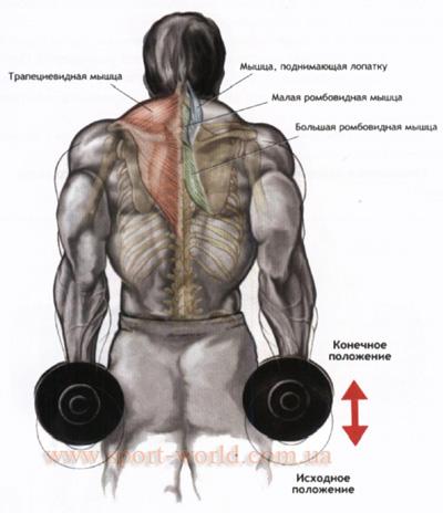накачать мышцы спины дома