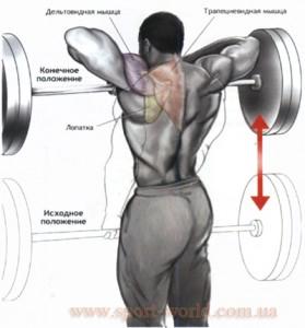 комплекс упражнений для мышц спины, верхний отдел