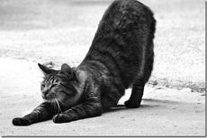 поза кошки йога фото